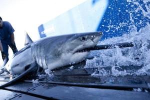 shark-wranglers-history-tv-show
